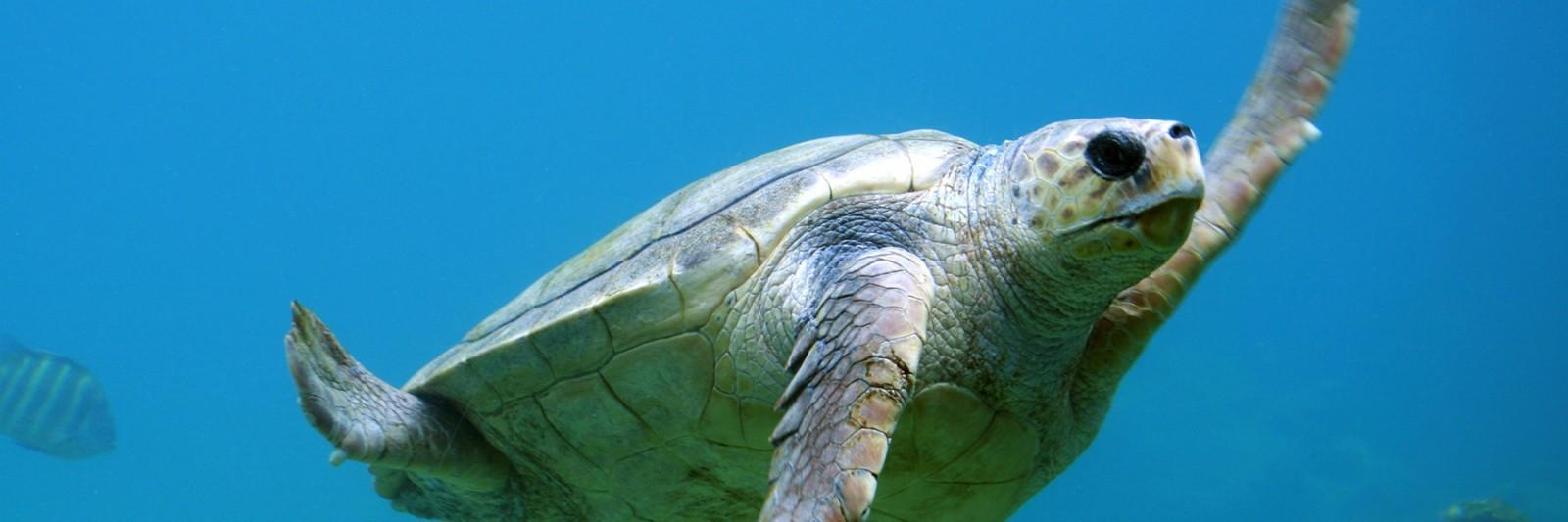 slider-turtle2