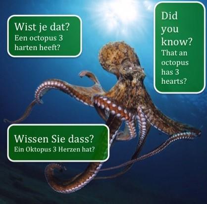 Oktopus 3 Herzen